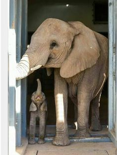 Momma Ele and her baby Phant