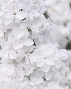 Flowers aesthetic black and white ideas