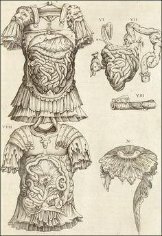 The viscera dissected through a suit of Roman armor. Cropped, from Juan Valverde de Amusco, Anatomia del corpo humano... (Rome, 1559). Coppe...