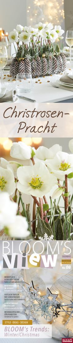 Christmas rose table decoration with spruce cone base and how it works works & … - Xmas Apple Decorations, Flower Decorations, Christmas Decorations, Funny Christmas Ornaments, Christmas Wreaths, Christmas Crafts, Christmas Arrangements, Flower Arrangements, Decoration Entree