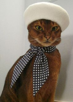 This chic cat knows how to sport a simple polka dot tie!