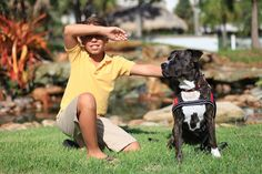 Ruby the Pitbull service dog by Ginger Monteleone, via Flickr