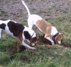 Sami & Lusi 2005, #braque #st.germain # pointer #puppy #pet #haustier #love #family #member #trauer #regenbogen #rainbow