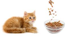 What to do if your Cat has Ingested something Poisonous