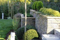Gazony jak obsadzić? - strona 3 - Forum ogrodnicze - Ogrodowisko