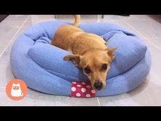 Cuccia per cani fai da te con maglione Idee riciclo creativo per cani - YouTube
