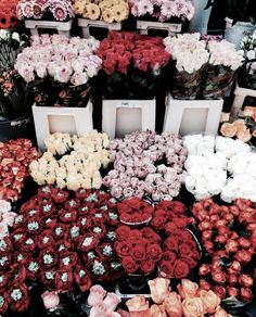 My Flower, Fresh Flowers, Beautiful Flowers, Bloom Baby, Bloom Where You Are Planted, Flower Aesthetic, Spring Aesthetic, No Rain, Diy Décoration