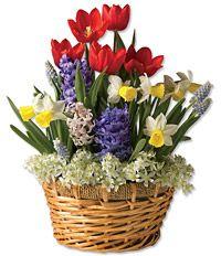 10 best flower baskets images on pinterest flower baskets spring spring flower basket mightylinksfo