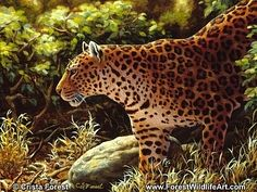 Leopard - Original Oil by wildlife artist Crista Forest - Fine Art Prints starting at just $25. Notecards also available. Get them here: http://fineartamerica.com/profiles/crista-forest.html
