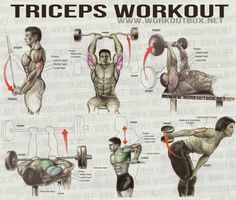 Fitness Training Tips: Triceps Workout - Healthy Fitness Workout Sixpack . Sport Fitness, Body Fitness, Mens Fitness, Fitness Tips, Fitness Motivation, Health Fitness, Workout Fitness, Cycling Workout, Fitness Exercises