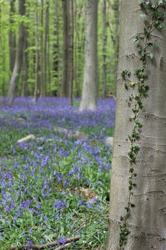 Ivy & bluebells - Photo Diary of a day in the forest