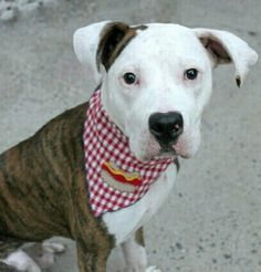 🔴🔴JACKSON -A1085809🔴8 mons old 🔴URGENT MANHATTAN 🔴AVAILABLE @NYCDOGS.URGENTPODR.ORG 🔴🔴