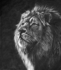 Original available big cat art depicting tiger, lion, leopard, cheetah wildlife drawings and paintings for sale by Mighty Fine Art UK artist Peter Williams. Big Cats Art, Cat Art, Pencil Drawings Of Animals, Pencil Drawing Tutorials, Lion Print, Traditional Artwork, Thing 1, Modern Art Paintings, Photorealism