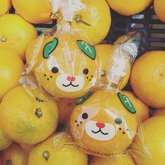 昨日連れて帰って来た愛媛のみきゃんちゃんを食べながら。犬×みかんのゆるキャラちゃん?です。 今週も、よろしくお願いします! #orange #dog #みきゃん