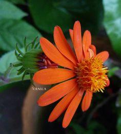 OTOÑO en flores