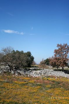 spring and autumn in chiobbica