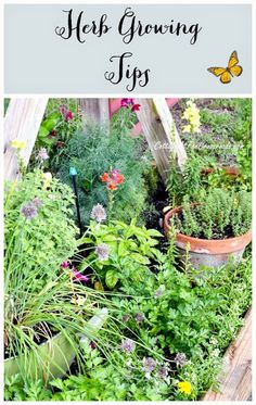 Best DIY Projects: Herb Growing Tips - Cottage at the Crossroads