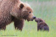 Kärleken till ett barn är lika stark i djurvärlden | Hänt.se