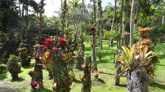 Le Jardin de Balata, Martinique.... incroyable et magique!!