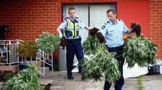 Photo: Hamish Blair Police remove cannabis plants from a house at 37 Yarmouth Avenue in St Albans on November 8, 2013 in Melbourne, Australia.