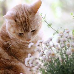 「はなかんざしとめろん」 お花クンクン、はちみつの匂い。