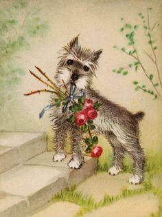 SCHNAUZER CHARMING DOG GREETINGS NOTE CARD