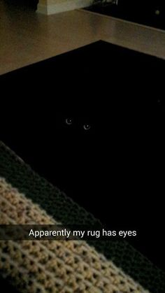 Basement Cat Works in Mysterious Ways - black cat blends in funny cat pictures - Cat Quotes - Funny Cat Quotes Funny Animal Pictures, Cute Funny Animals, Funny Cute, Cute Cats, Hilarious, Funny Pics, Funny Kitties, Cat Fun, Super Funny