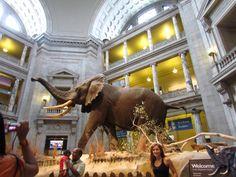 Museo Nacional de Historia Natural de Washington