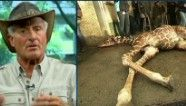 Jack Hanna lashes out at Copenhagen zoo - what a crock to kill a healthy giraffe!  They could've found it a home.