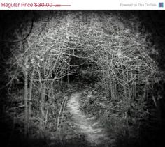 Haunted Forest Photo  Gothic Fairytale by missquitecontrary, $25.50