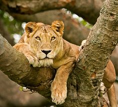 21 Majestic Photos of Lions