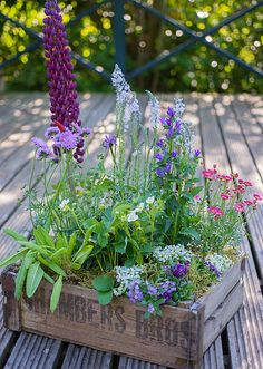 Various flowers planted in an old crate