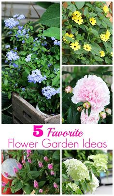 Blue white flower garden ideas suggestions for blooming plants 5 favorite flowers for the garden mightylinksfo