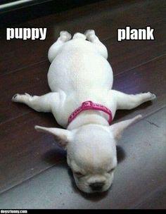 Puppy plank :) www.kiloklubi.fi