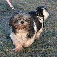 Akron Ohio Shih Tzu Meet Oreo A For Adoption Https Www Adoptapet Com Pet 20317624 Akron Ohio Shih Tzu Pets Kitten Adoption Dogs