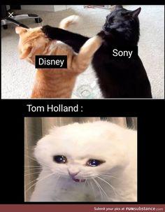 Disney & Sony Spiderman Tom Holland MCU The post Disney & Sony Spiderman Tom Holland MCU appeared first on Marvel Memes. Avengers Humor, Marvel Jokes, Funny Marvel Memes, Crazy Funny Memes, Really Funny Memes, Funny Relatable Memes, Marvel Avengers, Funny Comics, Memes Humor