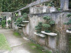 Unique Bonsai Wall display