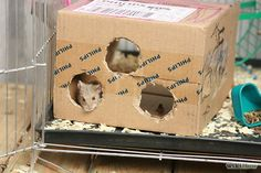 diy hamster toys out of cardboard - Google Search