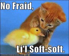 soft-soft
