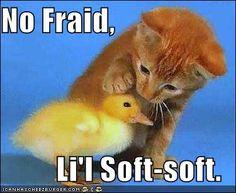 No Fraid.
