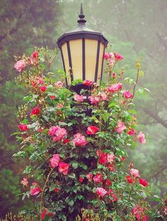 Stora lyktor i trädgården kan bli ännu finare när blommorna får göra sitt.