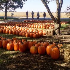 another pumpkin patch pic