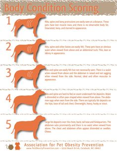 How to tell if your dog is over/under weight