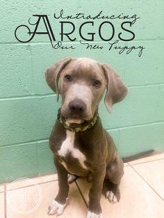 Introducing Argos, Our New Puppy! http://www.healthstartsinthekitchen.com/2016/05/10/introducing-argos-new-puppy/?utm_campaign=coschedule&utm_source=pinterest&utm_medium=Hayley%20%40%20Health%20Starts%20in%20the%20Kitchen&utm_content=Introducing%20Argos%2C%20Our%20New%20Puppy%21