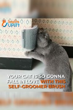The Cat Self Groomer Brush provides easy-access rubbing pleasure for cats, while the bristles simultaneously remove loose and shedding hair. The brush can be snapped in and out of its frame for simple maintenance. Animals And Pets, Funny Animals, Cute Animals, Crazy Cat Lady, Crazy Cats, Cute Cats, Funny Cats, Cat Fun, Pretty Cats