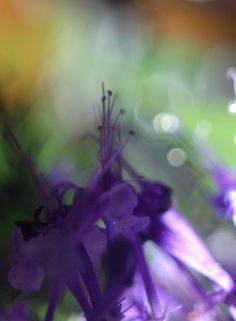 Songs, Explore, Flowers, Plants, Photos, Photography, Image, Pictures, Photograph