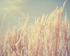 Wheat Fields #summer #chalknyc #chalkaholic www.chalknyc.com
