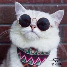 Soy Hermoso Kittens Cutest, Cats And Kittens, Gatos Cool, Cat Dressed Up, Dog Emoji, Dog Comics, Cat Work, Cat Sunglasses, Cat Icon