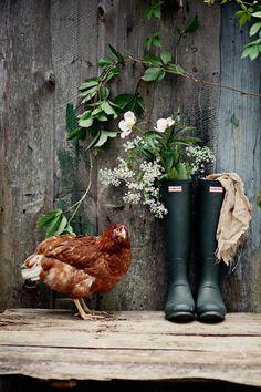 looks like our chicken named Derek❤