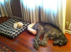 funny-dog-picture